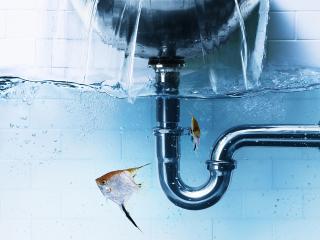 обои Декоративные рыбки в ванной фото