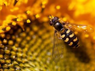 обои Макрофото мухи на цветке фото