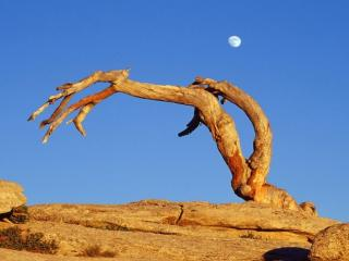 обои Сухое дерево на камнях фото
