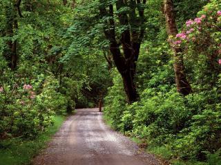 обои Дорога в весеннем зеленом лесу фото