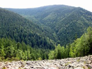 обои Красоты зелени лесной в горах фото