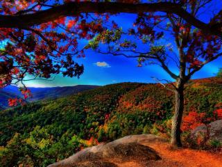 обои Начало осенней поры в горных лесах фото
