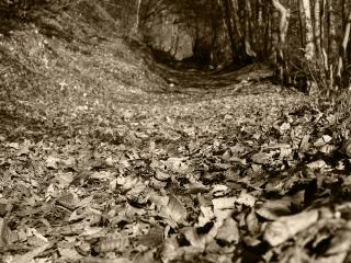 обои Опавшая листва в лесу на тропинке фото