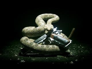 обои Пистолет и змея фото