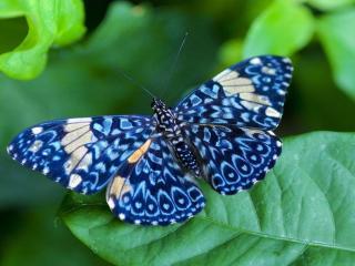 обои Бабочка голубого цвета фото