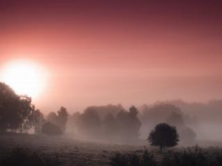 обои Туманный розовый рассвет фото