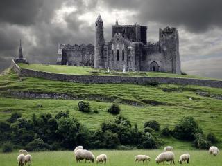 обои Старый замок и овцы на выпасе фото