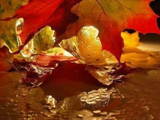 обои Кленовые листья золотой осени фото