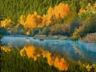 обои Осень в реке фото