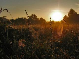 обои Раннее утро в поле фото