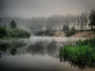 обои Хмурое летнее утро на пруду фото