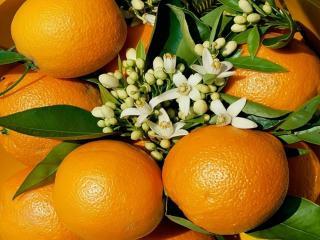 обои Апельсины и цветы фото