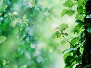 обои У дерева прорастают новые ветви фото