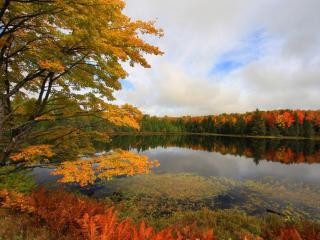 обои Лес,   точно терем расписной,   лиловый,   золотой,   багряный фото