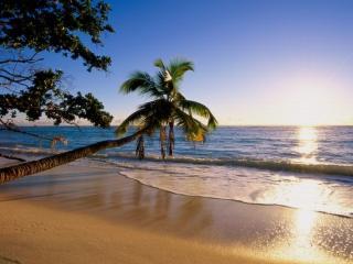 обои для рабочего стола: Пальмы,   море и золотой песок