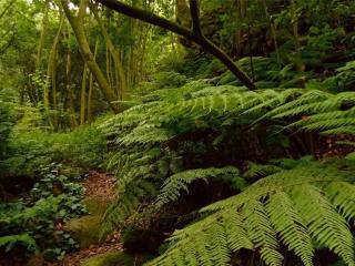обои Чаща леса фото