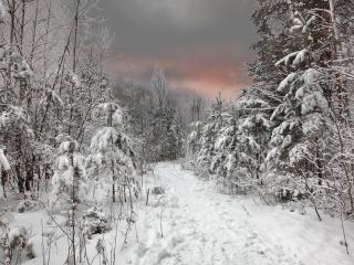 обои Тропинка в заснеженном лесу фото