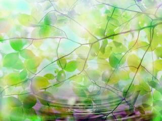 обои Зеленые листья, нежность фото
