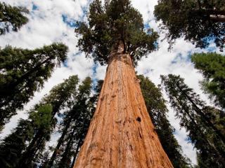обои Высокие кроны деревьев устремленные к небу фото