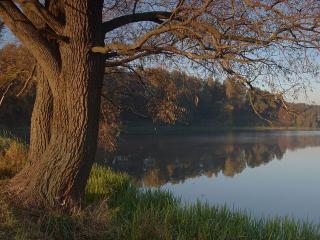 обои Два старых дерева у осеннего пруда фото