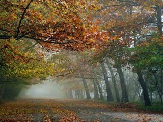 обои Аллея осеннего парка фото