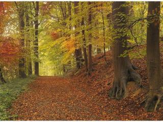 обои Осенний лес и дорога в листве фото