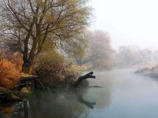 обои Поздняя осень на берегу заросшей речки фото