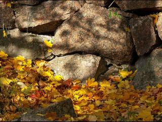 обои Камни и жёлтые листья фото