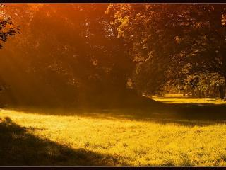 обои Лес и полянки освещённые солнцем фото