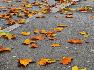 обои На асфальте осенние листья фото