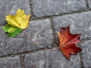 обои Кленовые листья на кирпичной мостовой фото