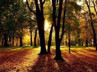 обои Солнце,   парк и осенние листья фото