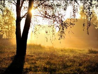 обои Деревенька моя - Утро фото