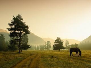 обои Дорога,   конь и горы фото