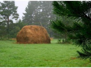 обои Летний тёплый дождь фото