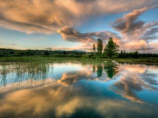 обои Отражение неба в заросшем летнем пруду фото