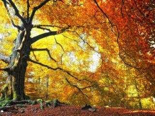 обои Старое дерево фото