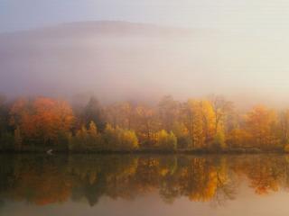 обои Туманная осень фото