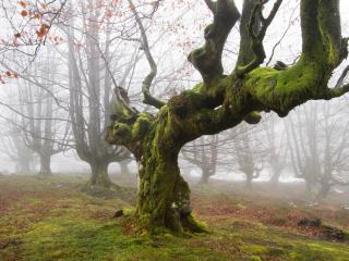 обои Деревья без листвы глубокой осенью фото