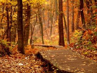 обои Деревянная дорога в осеннем лесу фото