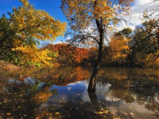 обои Осенние листья плавают в пруду фото