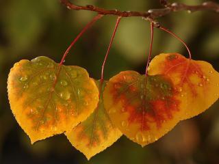 обои Разноцветные листочки с каплями дождя фото