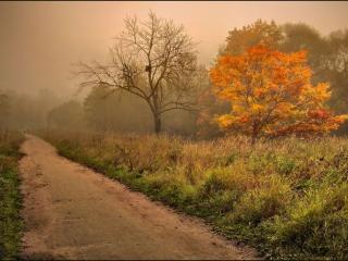 обои Скворечник в осеннем тумане у дороги фото