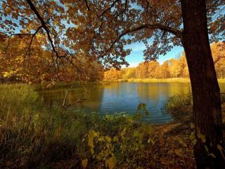 обои Тёплая осень и маленький пруд фото