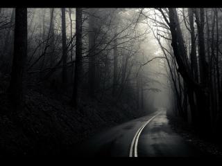обои Асфальтированная дорога через вечерний лес фото