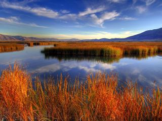 обои Трава растет посреди озера фото