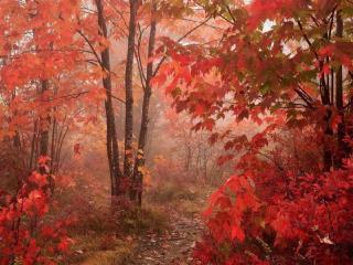обои Красный цвет осени в тумане фото