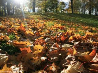 обои Осенние листья на солнечной полянке фото