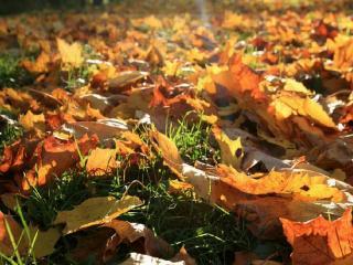обои Осенние листы в свете солнца фото