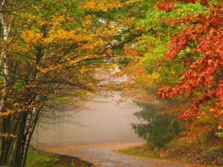 обои Туман осенний фото